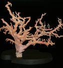 枝珊瑚 置物